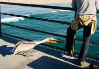Hungry or Angry (Huntington Beach - California)