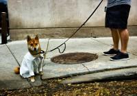 10- Doctor dog
