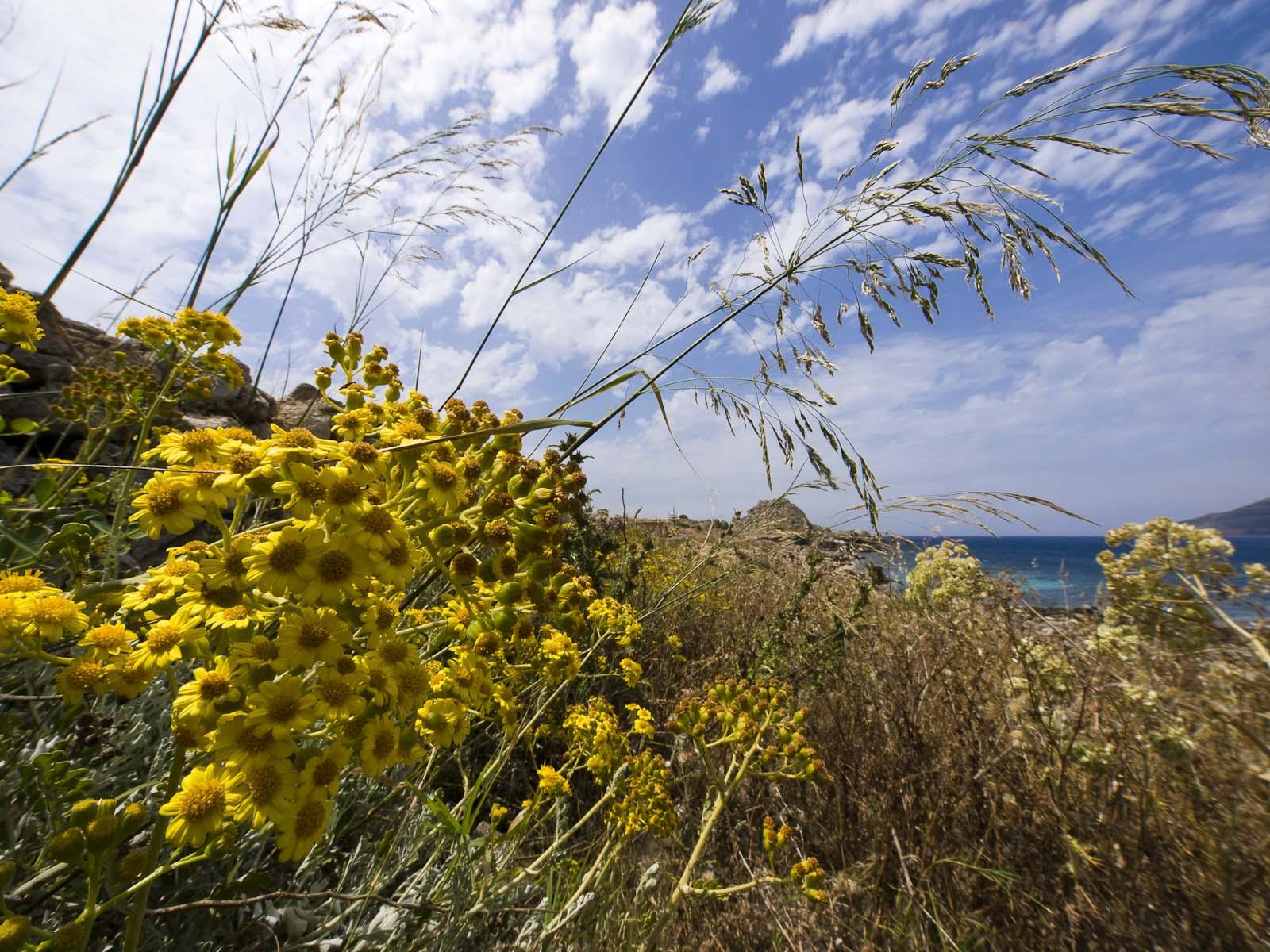 06 - GIALLO (Yellow)