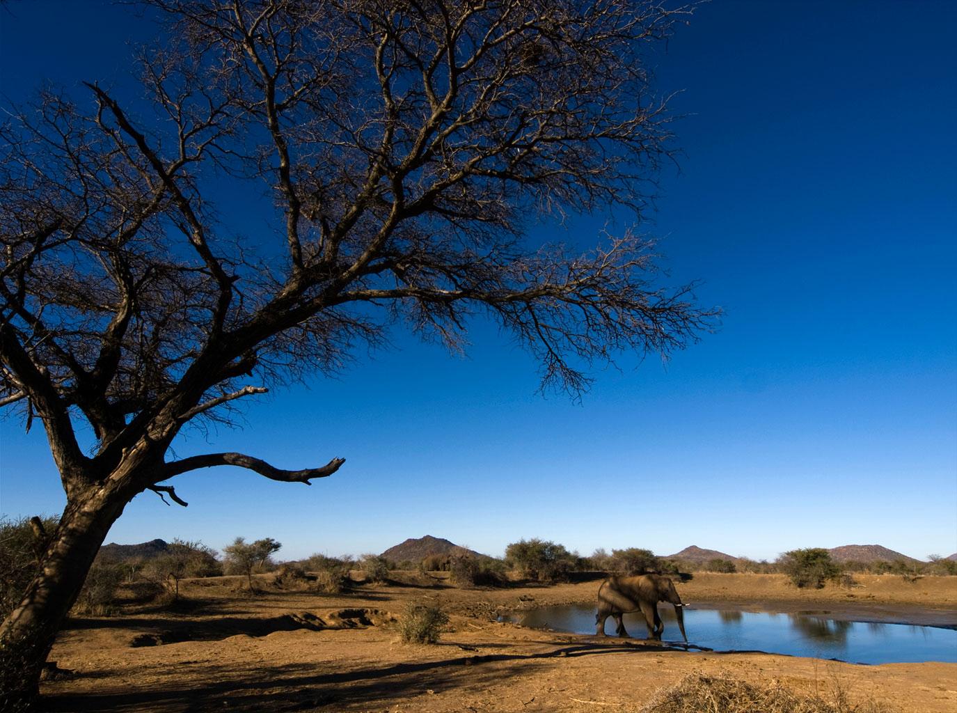 Madikwe reserve